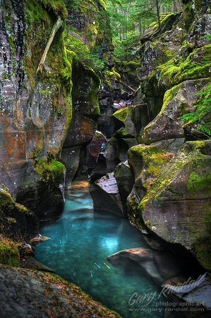 Avalanche Creek Gorge at Glacier National Park, Montana planning to re-visit GNP & Banff next summer!