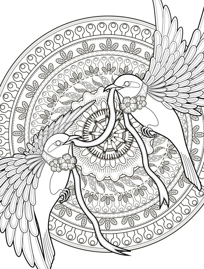 Adult Coloring Pages With Birds Free Downloadable Web For The Top Books