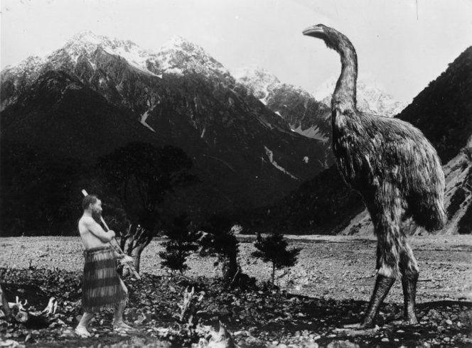 Маори и гигантская птица-моа. Фотоколлаж сделан в 1936 году. Моа были унитожены маори задолго до того, как в Новой Зеландии появились европейцы. По неподтверждённым свидетельствам, отдельные представители этих птиц ещё встречались в конце 18 — начале 19 века.
