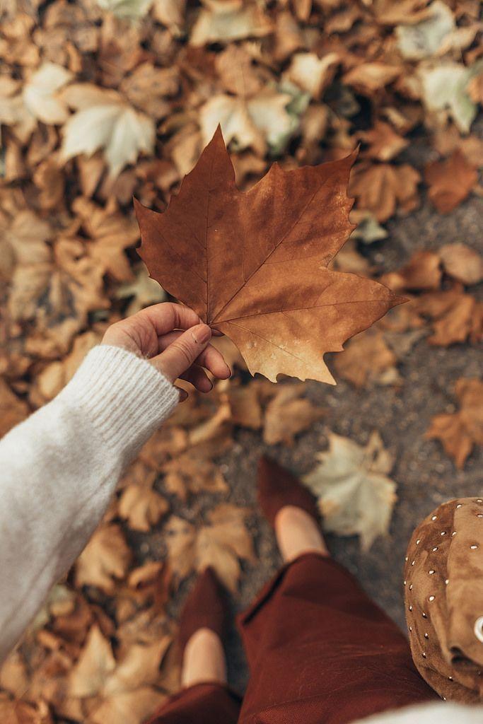 Autumn Autumn Photography Autumn Aesthetic Autumn