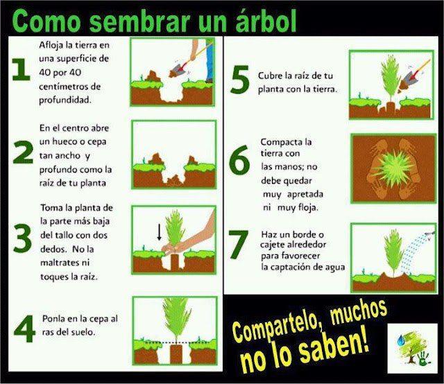 ¿Sábes cómo sembrar un árbol? #infografía