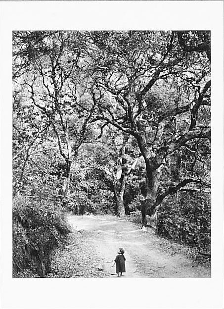 CHILD ON FOREST ROAD, it is sold on anseladams.org but I doubt if this is a authentic photo:  there is not a very rich balanced range of black to white which is so typical due of his own Zone system.