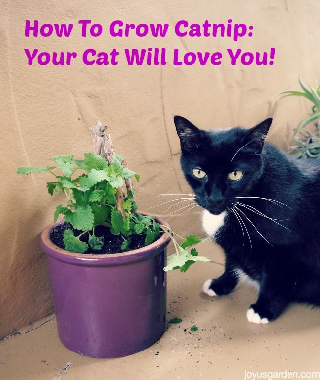 17 best images about here kitty kitty on pinterest i for Indoor gardening with cats