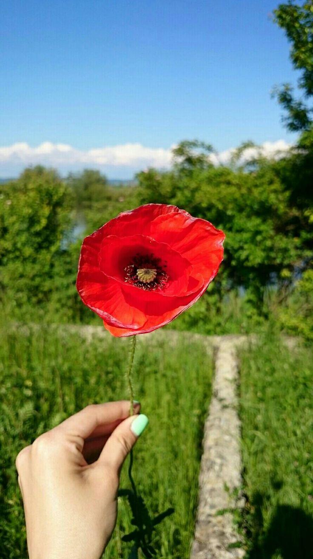 Lovely poppy