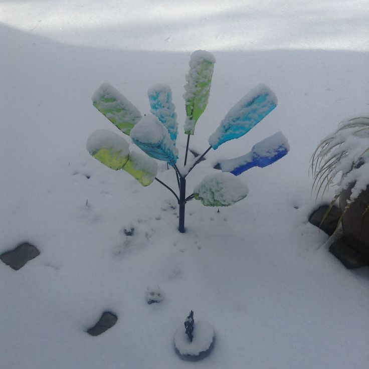 Bottle tree in snow--Canton, Georgia (from reader Laurel W.).