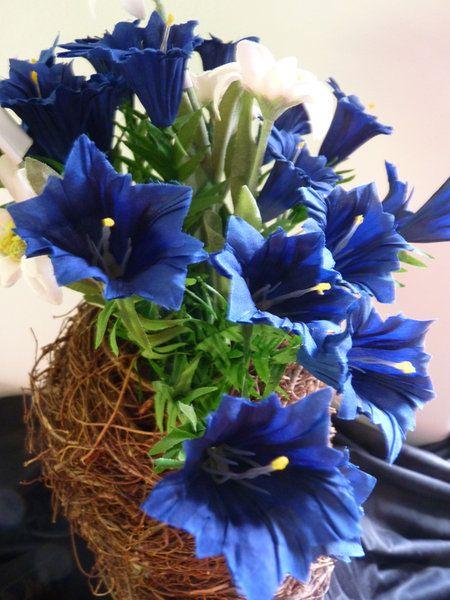 Blauer Enzian mit fünf Blüten