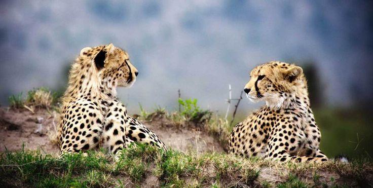 Masai Mara - the grandaddy of national parks