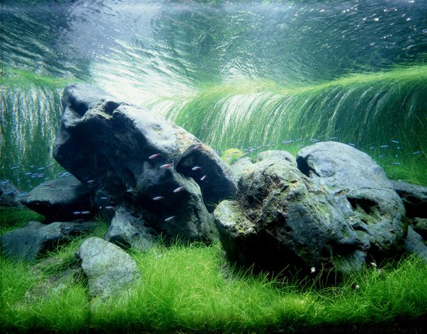 The Grandfather of Freshwater Aquariums: Takashi Amano.  looks like a waterfall!