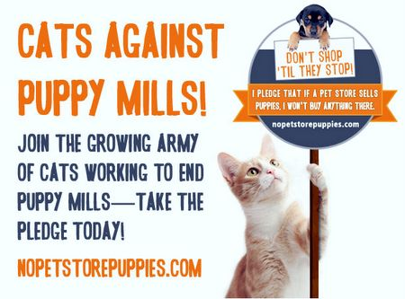 What do they do to kittys at kitty mills?