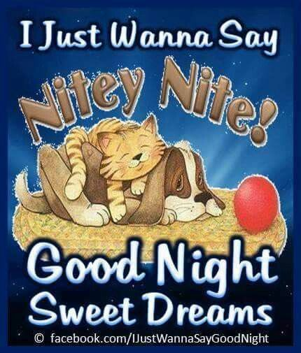 Nitey nite kitty & puppy
