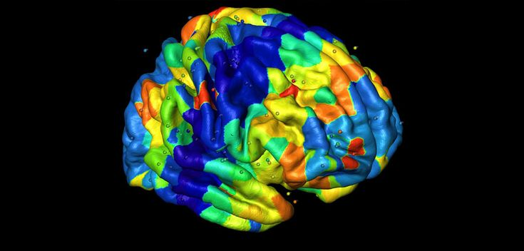 The highly consistent anatomical patterning found in the brain's cortex is controlled by genetic factors, reports a new study by an…