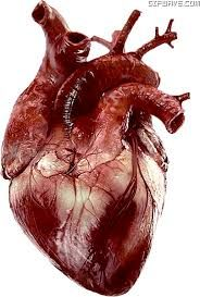 corazon real - Buscar con Google