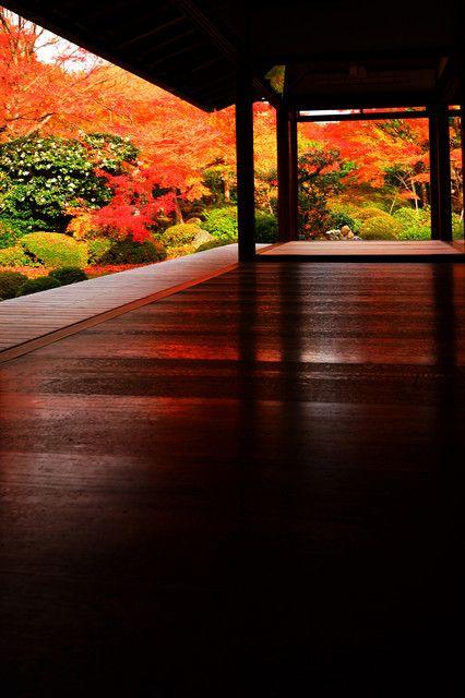 床もみじといえば岩倉実相院が有名ですが 鷹峯の源光庵でもきれいな床もみじが見られます(*'▽'*)