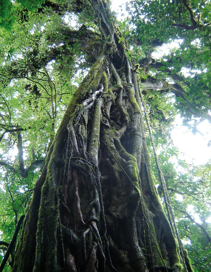 Cloud forest Costa Rica #JetsetterCurator