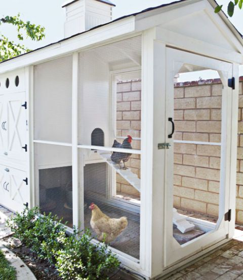 The Bullards chose heavy-duty wire fencing for the walls of the coop's main hang-out spot, in order to deter predators like coyotes, raccoons, even neighborhood dogs and cats. Eighteen-inch-deep concrete footings below the structure, plus bolt locks on the doors, provide extra security. A nap perch stretches from one side of the pen to the other, and a gangplank leads up to the roosting house. The design takes human comfort into account, too, with a 7-foot-high ceiling that allows the…