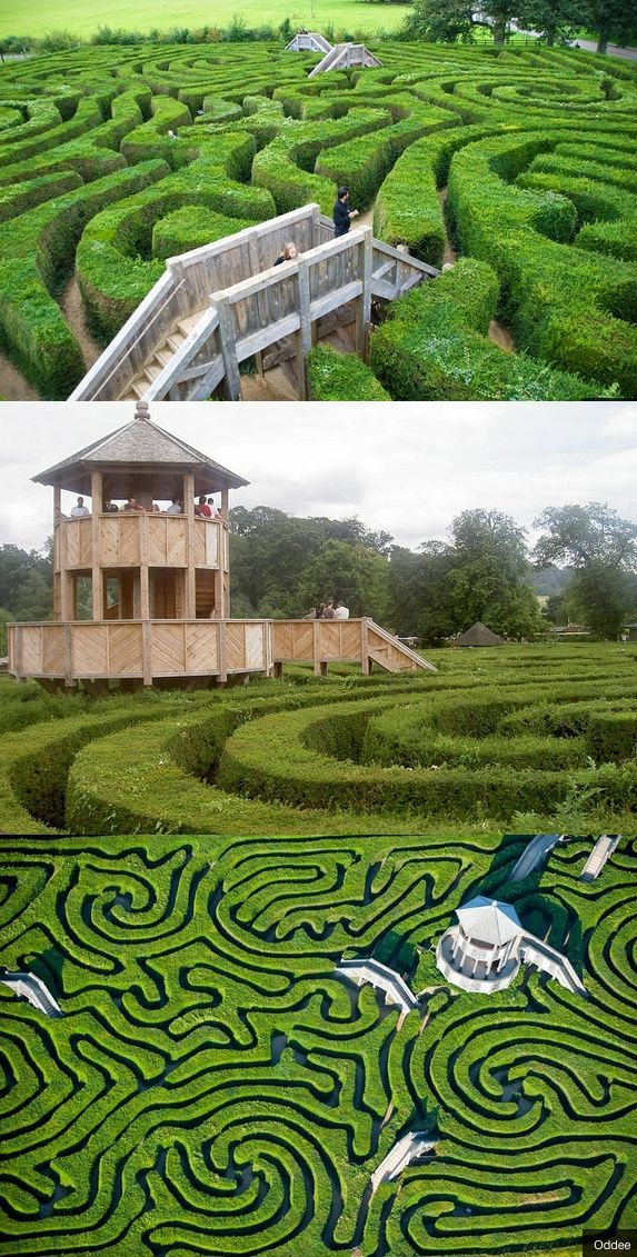 The Longleat Maze is the longest hedge maze in the world! Get lost!