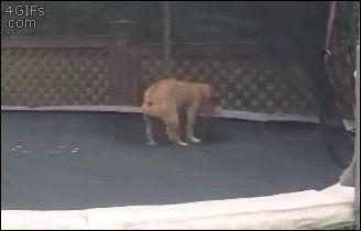 coisas-sobre-bulldogs-4