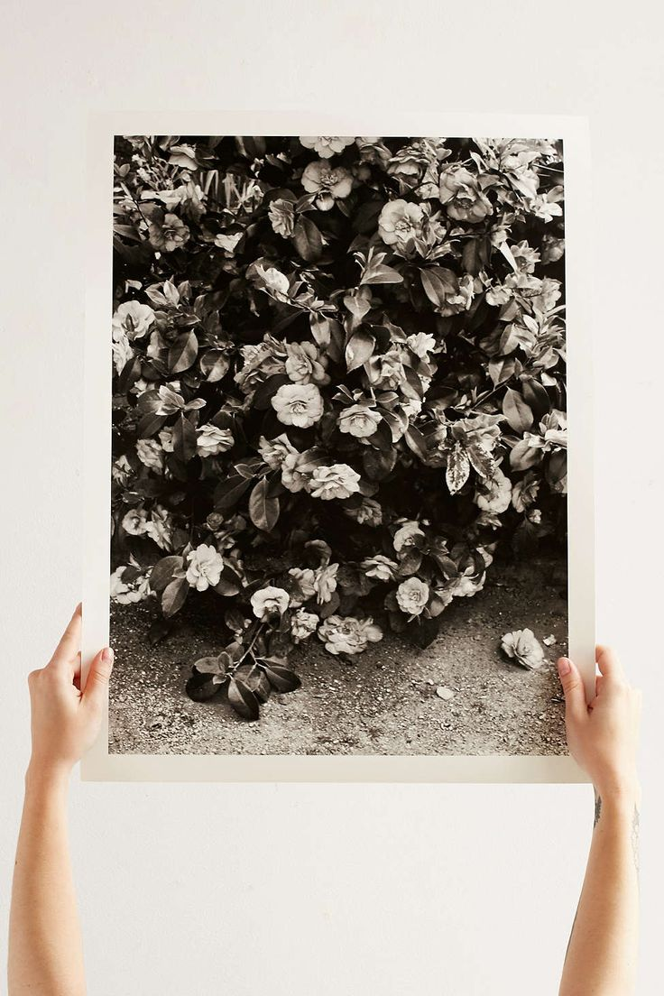 Urban Outfitters Wall Art 17 best images about art: free. on pinterest | urban outfitters