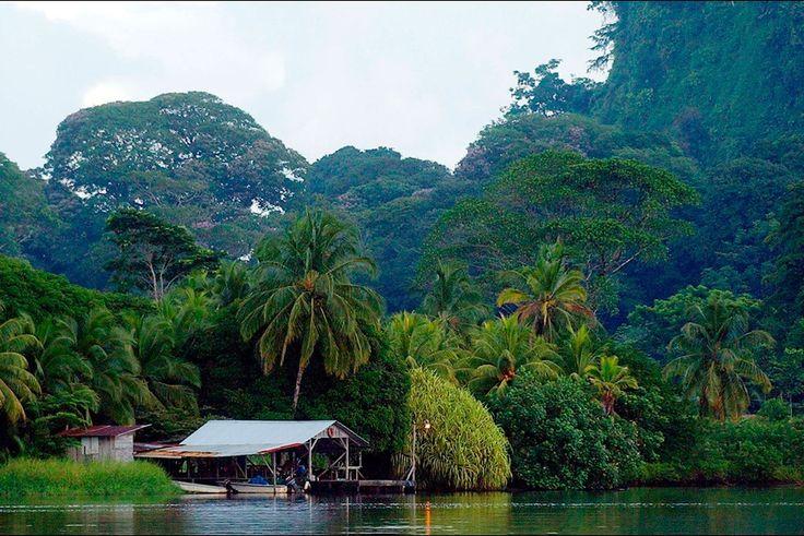 Parc National de Tortuguero (Costa Rica) - Troisième parc le plus visité du Costa Rica malgré un accès difficile, le parc de Tortuguero présente un décor terrestre et marin splendide. Et une faune et une flore des plus extraordinaires : 107 espèces de reptiles, 57 espèces d'amphibiens, 55 espèces de poissons d'eau douce, 60 espèces de mammifères et plus de 300 espèces d'oiseaux.