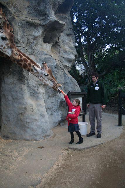 Taronga Zoo Roar & Snore >> 10 Weird Attractions in Sydney http://thingstodo.viator.com/sydney/weird-attractions-in-sydney/