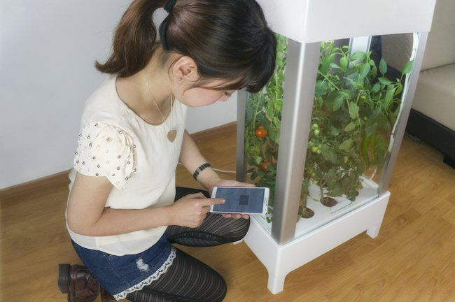 This automated hydroponic growing system is like a TARDIS for vegetables : TreeHugger