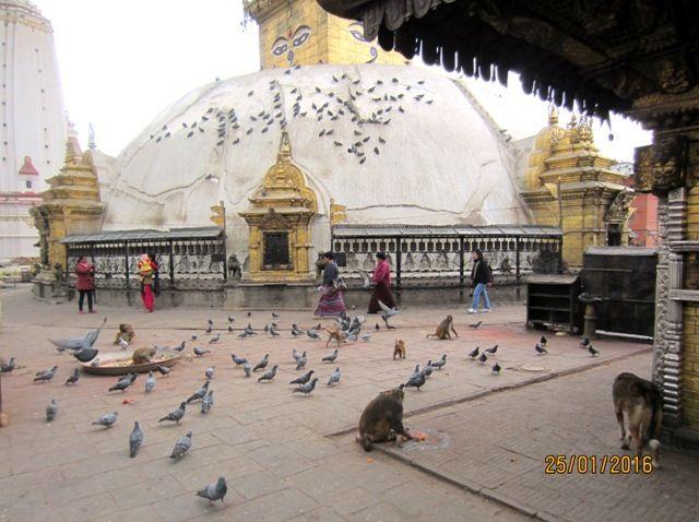 Сваямбунатх. Храм обезьян, голубей и собак.