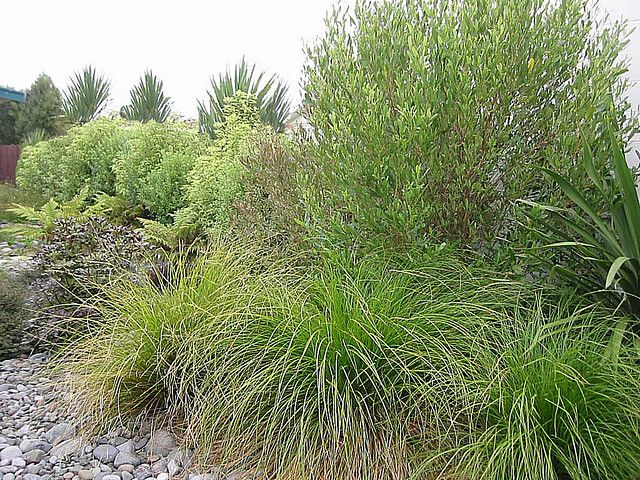 Native plantings new zealand plants nzlandscapes com for Native garden designs nz