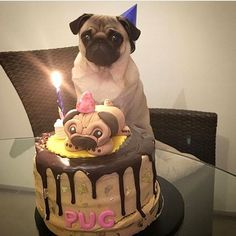 Tag someone who would like to see this photo by .thepug ⠀ Want to purchase Pugs clothing❓ Please click on the website link in my profile to buy it ➡️ ⠀ : #puggle #pugofinstagram #pugsofig #pugsrequest #cutepuppies #pugsandkisses #puglovers #blackpug #puppyoftheday #puglove #petoftheday