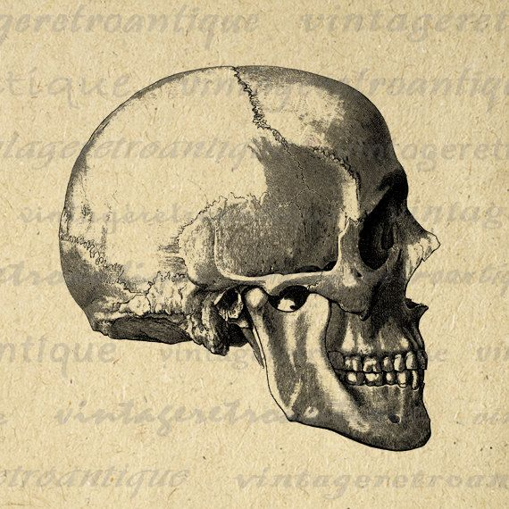 Skull Side View Printable Digital Download Graphic Image Artwork. Printable high quality digital illustration from antique artwork. This vintage high resolution digital image works well for iron on transfers, printing, pillows, tote bags, and many other uses. Great for etsy products. This digital image is high quality, high resolution at 8½ x 11 inches. Transparent background version included with every graphic.