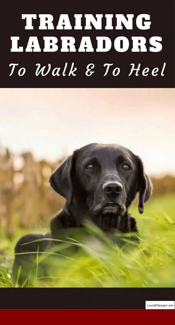 Dog Training Tips For Aggressive Dogs And Pics Of How To Train A