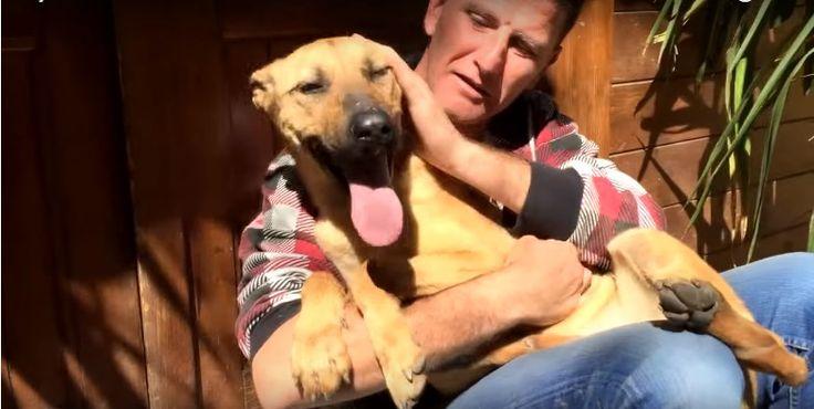 Le 25 Février 2016: L'histoire de Barilla, un chien abandonné et très affamé recueilli par Eduardo Rodriguez dans un centre de sauvetage animalier en Grenade Espagne. Barilla a été atteint d'une extrême malnutrition depuis qu'elle aétéabandonné,amenéd'urgencedans une clinique vétérinaire du Grenade dans un état critique ou lemédecin, ne sachant pas s'il va survivre ou mourir. […]