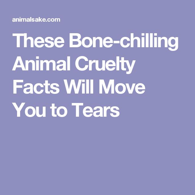 These Bone-chilling Animal Cruelty Facts Will Move You to Tears