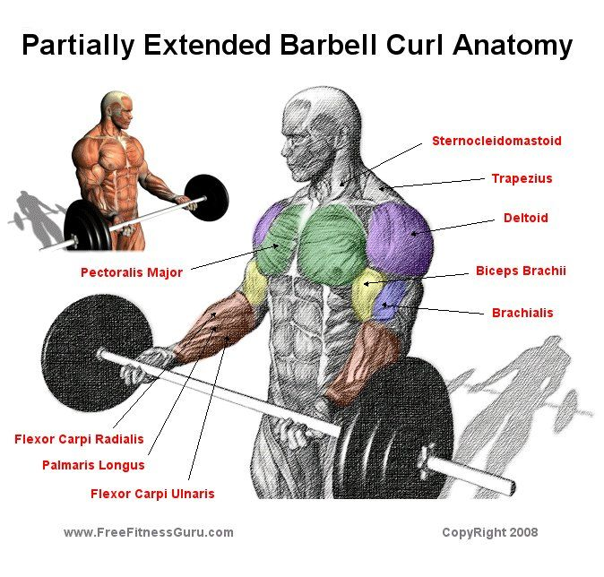 Barbell Military Press: 50+ Best Bodybuilding Anatomy 2 Images By Teri Proude On