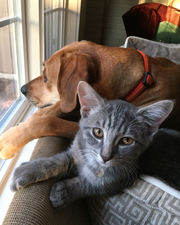 Dog & Cat Couple - Angie Kniss
