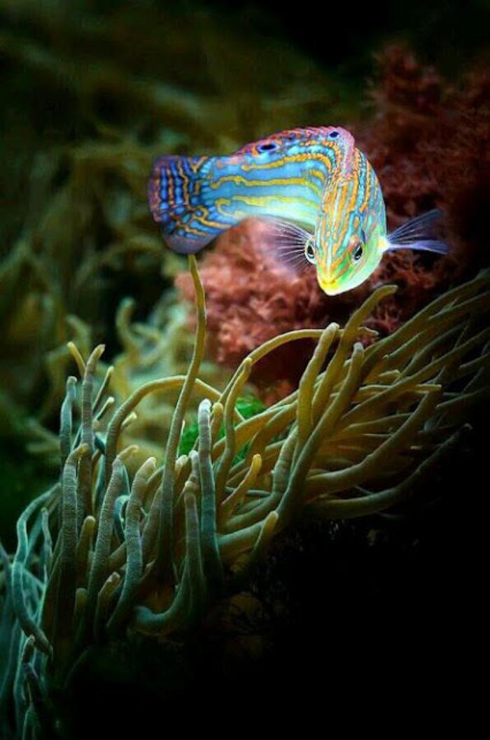 les fonds marins, couleurs étincellantes d'un beau poisson