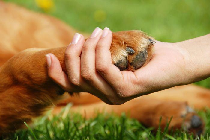 Una sesión de preparación podría ser un desafío para usted y su perro, especialmente si el/ellla se excita o no cuando lo acaricia. Aquí están algunos métodos para ayudar a allanar el camino para una experiencia agradable para los dos: Sólo preparar a su perro cuando está en calma, tal …