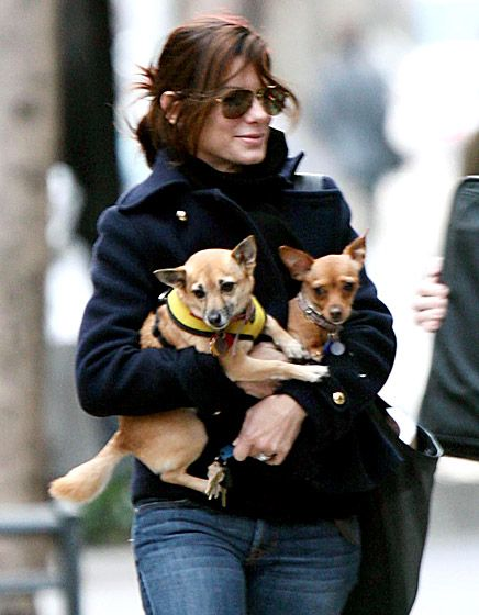 Sandra Bullock Now that her son Louis is old enough to walk, this Oscar-winner enjoys carrying around her pups Ruby and Poppy.   Read more: http://www.usmagazine.com/celebrity-news/pictures/celebs-with-their-pets-20131211/33831#ixzz2ki80DSCF  Follow us: @Us Weekly on Twitter | usweekly on Facebook