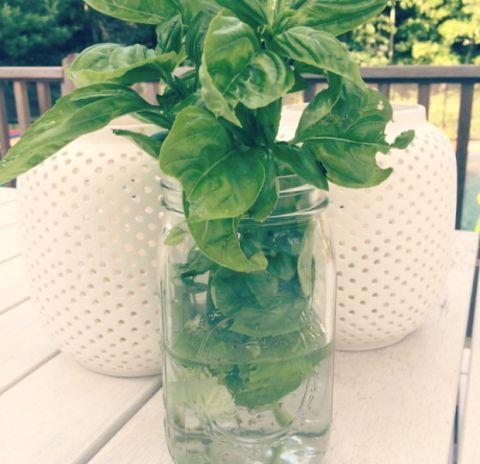 21 best Gardening Ideas images on Pinterest | Backyard ...