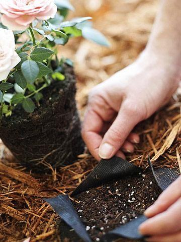 Best Ways to Save Water in Your Garden - 101 Gardening