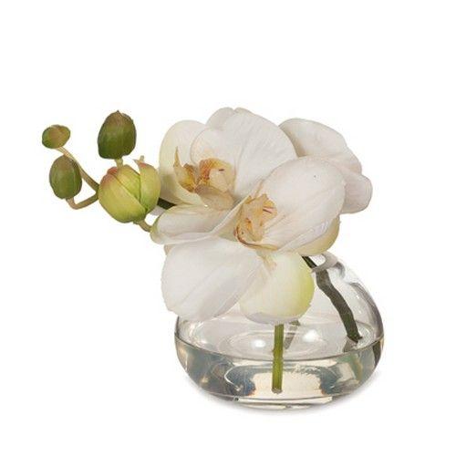 Orchid Phalaenopsis in Vase White RRP $30