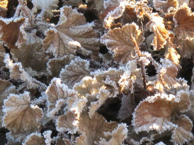 Icing leaves at the border
