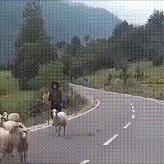 The joy of shepherding