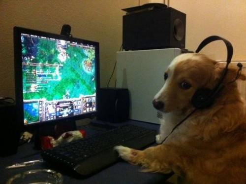 Dog plays Dota , so cute :)