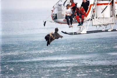 Newf jumping from helicopter! Amazing!