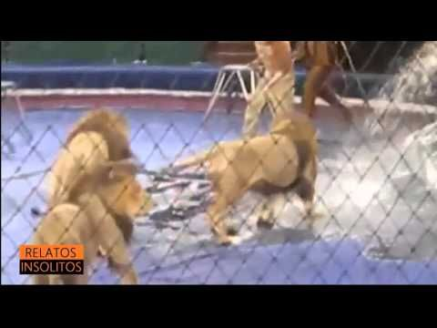 Horrible Tragedia En Lviv Circus (Imagenes Impactante)