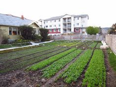 $75,000 On 1/3 Acre - 9 Tons Of Vegetables Produced On One Third Of An Acre In The City... - http://www.ecosnippets.com/gardening/9-tons-produced-on-one-third-of-an-acre/