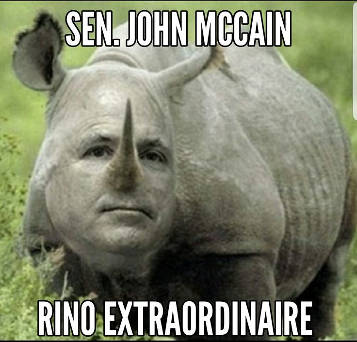 Image result for mccain rino