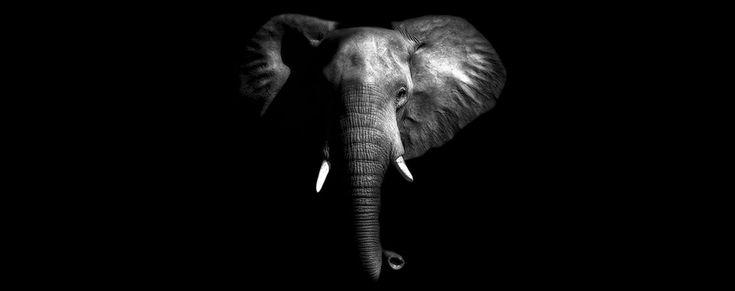 99 потрясающих портретов животных: львы, тигры, медведи, волки, лисы, гориллы, гепарды, антилопы, слоны, лошади, леопарды.
