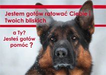 Psy ratownicze; jak pracują, szkolenie... dzieci i rodzice, uczniowie i nauczyciele, przyroda i zoologia, ludzie i zwierzęta