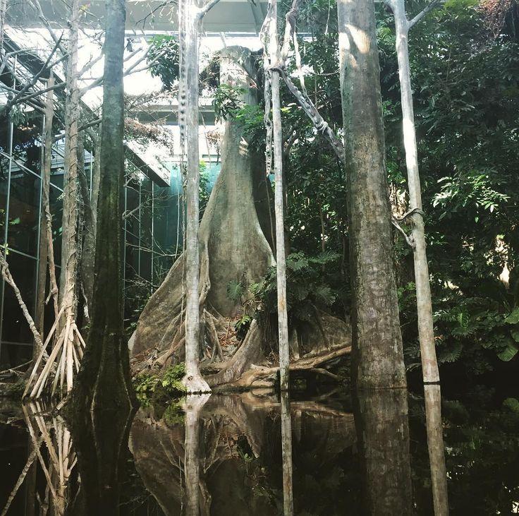 The indoor rainforest #barcelona #cosmocaixa